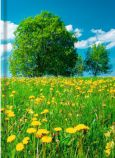 Venceremos daffodil meadow note book A5