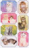 BSB Katzenfotos im Rahmen Sticker