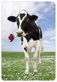 HARTUNG EDITION cow with rose MEDLEY postcard