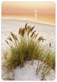 HARTUNG EDITION dunes grass in sunset MEDLEY postcard