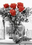 HARTUNG EDITION red roses bouquet in glass vase KONTRASTE postcard