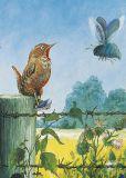 INKOGNITO wren - Rudi Hurzlmeier postcard