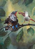INKOGNITO cuckoo - Rudi Hurzlmeier postcard