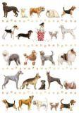 QUIRE Hunde Postkarte
