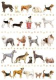 QUIRE dogs postcard