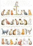 QUIRE cats postcard