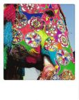 AQUAPURELLA Elefanten-Festival, Jaipur, Indien - Bon Voyage Postkarte + Umschlag