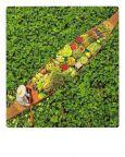 AQUAPURELLA Schwimmender Markt, Thailand - Bon Voyage Postkarte + Umschlag