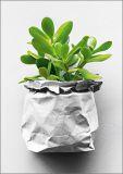 HARTUNG EDITION Pflanzenableger in Papiertüte Kontraste Postkarte