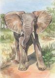 FLORIS Elefant Klappkarte m. Umschlag