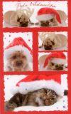 BSB Weihnachtshunde und -katzen Sticker