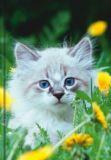 VENCEREMOS Süße Katze A5 Notizbuch blanko
