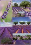 Herma Lavendel Sticker