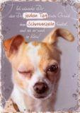 HARTUNG EDITION Grund zum Schmunzeln - Hund IN TOUCH Postkarte
