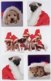 Z-Design Hundefotos Weihnachten Sticker