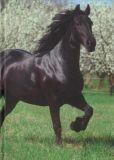 VENCEREMOS Friese / Pferd A5 Notizbuch blanko