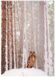 RANNENBERG Uhu im schneeverhangenen Wald Postkarte