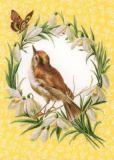 GOLLONG Vogel mit Schneeglöckchenkranz Carola Pabst Postkarte