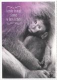 GRUSS & CO Familie bringt Sonne in Dein Leben Postkarte