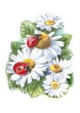 FLORIS Margeriten mit Marienkäfern Postkarte