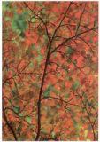 RANNENBERG Herbstbaum Postkarte