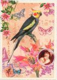 TAUSENDSCHÖN Nymphensittich Postkarte